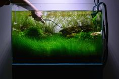 Trimming plants in an #Aquascape : [ ANIMATED GIF ] ! #timelapse La taille des plantes en aquascape