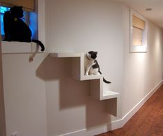 building cat shelves | Or just what i (rather, we – r and i make a great team!) did on a ...