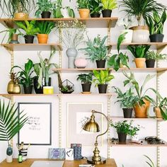 Green Home Office Inspiration · Workspace Design · Creative Studio · Artist Desk · Plant Decor Home Office Inspiration, Garden Inspiration, Interior Inspiration, Tuesday Inspiration, Workspace Inspiration, Interior Ideas, Interior Plants, Interior Design, Modern Interior