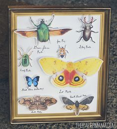 FREE Printable Butterfly Collection