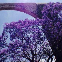 7 best jacarandas images on pinterest jacaranda trees mexico quereraro jacarandas aqueduct mexico built in 1726 gumiabroncs Images