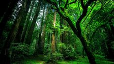 Green Tree HD Background Pictures Image Photo Wallpaper Forest Wallpapers Photos Images