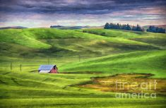 The undulating countryside of the Palouse region of Washington is punctuated by barns and trees.