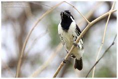 Birdwatching  and  Photography: Bird walking  in Baringo