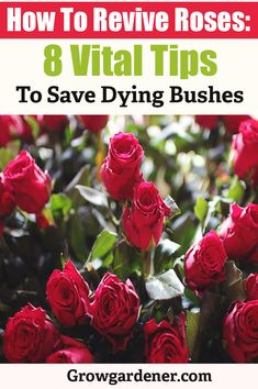 Choose from a lot of various type of flowers like Red rose, white rose, orchid, carnation, gerbera and much more. Gardening For Beginners, Gardening Tips, Flower Gardening, Vegetable Gardening, Roses Garden, Garden Pots, Garden Ideas, Rustic Pergola, Backyard Pergola