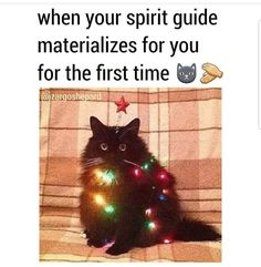 Spirit guide Cute Animals With Funny Captions, Cute Animals Puppies, Funny Cat Pictures, Cute Animal Pictures, Cute Baby Animals, Funny Animals, Funny Cat Fails, Funny Cats And Dogs, Funny Cat Memes
