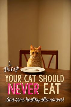 "6 Things Your Cat Should NEVER Eat. Do you have a cat that will eat everything in sight? Some of your ""people food"" is perfectly safe for cats (in small quantities) but you should be aware of the many foods in your fridge or pantry that can cause significant health problems if your cat eats them. Here are 6 things your cat should never eat …and some healthy alternatives!"