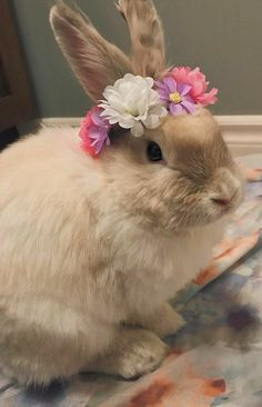 Cute Bunny Pictures, Rabbit Pictures, Bunny Pics, Funny Pictures, Rabbit Art, Pet Rabbit, Animals And Pets, Funny Animals, Funny Rabbit
