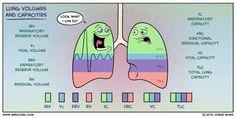 Capacidades y volúmenes de los pulmones