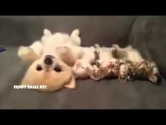 Funny cat video. Puppy with kittens