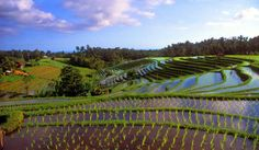 Rice terraces near Pupuan ,Central Bali, Indonesia       41 Most Mysterious and Interesting Places on Earth - HitFull.com
