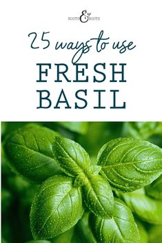 You can make your basil harvest last all year long by preserving it now! Just by growing a few basil plants, you should have plenty of fresh basil to enjoy some now and save the rest for later. You can't go wrong with any of the 25 ways to use fresh basil. #preservation #harvesting #harvest #garden #herbs #growingfood