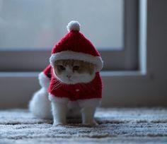 "mel-cat: "" Lonely Christmas ( via Ben Torode ) """