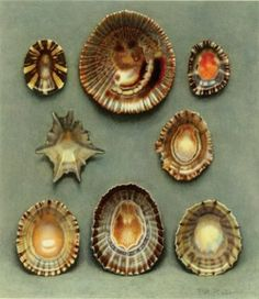 Jehovah's art in his creation.  Lovely.   Sea Shells, Paul Robert, 1930