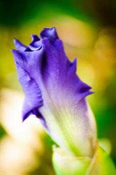 Purple Gradient - Dayton Photographer Alex Sablan