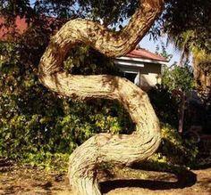 世界の奇妙な木05