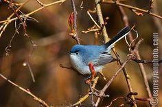 Blue - Grey Beauty | Flickr - Photo Sharing!