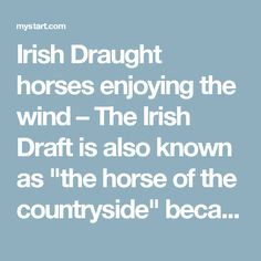 """Irish Draught horses enjoying the wind – The Irish Draft is also known as """"the horse of the countryside"""" because of its use on many small Irish farms, and is also the foundation stock for breeding the Irish Sport Horse."""