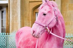 The one vision I've had of Macy since she passed is of her riding a iridescent, pale pink horse with an iridescent white main. Much, much prettier than this one, but this picture reminded me of that. I have no doubt she has that horse in heaven.
