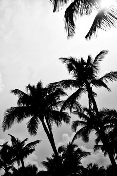 palm life in black and white