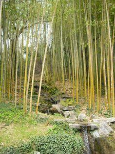 The fascinating Bamboo garden in Villa Carlotta.