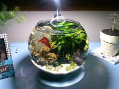 LIST: low tech, mini, nano, pico planted tanks: ---> 50+ <--- examples