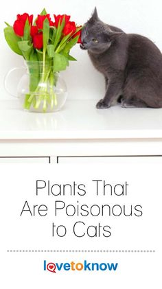 Is your cat living side-by-side with poisonous plants? Before kitty chews something fatal, check this list of plants to avoid and get rid of them. Toxic Plants For Cats, Cat Plants, Teacup Cats, Cat Hug, Herding Cats, Youtube Cats, Fish Care, Kitten Love, Different Plants