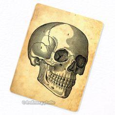 Skull #1 Deco Magnet #dreamerystudio #anatomy #medicalillustration