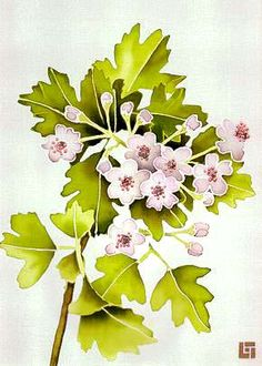 Hawthorn Blossom. Leonard Thompson.
