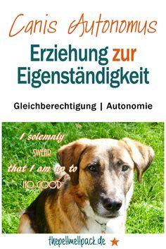 Erziehung zur Eigenständigkeit, Gleichberechtigung und Autonomie | Hund | Training | Team | Erziehung | thepellmellpack.de