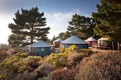 Yurts of Treebones Resort: glamping in Big Sur