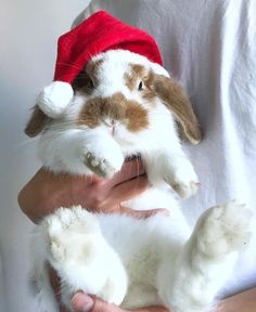 Christmas is coming and I have found some pretty little bunnies that rock Christmas costumes. Check them out: Aren't this bunny costumes adorable? Cute Baby Bunnies, Funny Bunnies, Bunny Bunny, Snow Bunnies, Bunny Rabbits, Baby Animals, Funny Animals, Cute Animals, Cutest Bunny Ever
