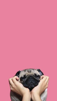 Pin by nicole tan on dog dog wallpaper, pug wallpaper, cute wallpapers. Dog Wallpaper Iphone, Animal Wallpaper, Wallpaper Backgrounds, Dog Lockscreen, Wall Wallpaper, Pet Dogs, Pets, Doggies, Pug Love