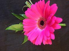 Cerise pink gerbera buttonhole