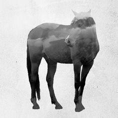 Artist Creates Stunning Cinemagraphs of Animals And Nature ~ Creative Market Blog || Said Dagdeviren