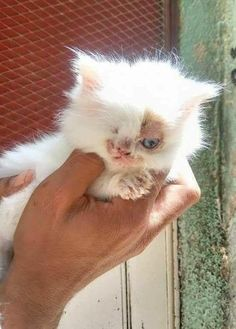 A man saved a tiny one-eyed kitten found on the streets in Cairo, and he was determined to find her a better life. Meet Poppy! Happy Homes Animal Rescue Poppy was spotted wandering the streets with only one eye. The motherless kitten was covered in ringworm in desperate need of help. A kind-hearted man saw …