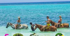 Price:  2 Persons from $150    Location:  Ocho Rios, Jamaica   Duration:  3 Hours 30 Mins   Optional Add-ons:  Beach Horseback Riding from Ocho Rios: $76  Beach Horseback Riding from Hotels in Runaway Bay: $8  Beach Horseback Riding from Grand Bahia Hotel: $8  Beach Horseback Riding from Beaches / Couples: $85    Availability:  Every Day at 9:00 am   Highlights:  - Horseback leisurely Ride through Jamaica greenery and lush vegetation - Visit beach to cool off and ride your horse through the…