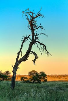 sunset, Kgalagadi Transfrontier Park in southern Africa (South Africa and Botswana border)