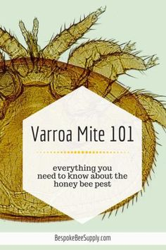 Everything You (N)ever Wanted to Know About Varroa Mites Bee Mites, Langstroth Hive, Integrated Pest Management, Raising Bees, Worker Bee, Bee Do, I Love Bees, Backyard Beekeeping, Honey Bees