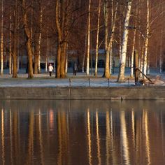 Hyvää huomenta Porin kansallinen kaupunkipuisto. Good morning Pori National Urban Park. #pori #kirjurinluoto #aamuaurinko #koivut