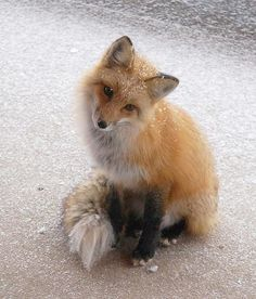 I had a lovely encounter with a fox whilst hiking this past summer. They are such wise creatures!