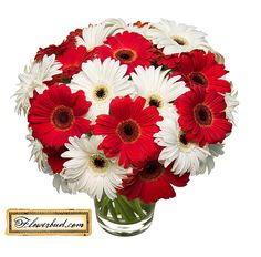 red gerber daisy wedding bouquet | Red And White Gerbera Bouquet  I'd like it in navy blue and white ;) KC