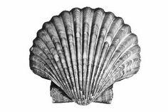 bw seashell tattoo