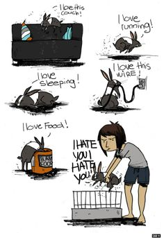 Bunny ownership summed up. RU Forum this is so like my bunny Helene!