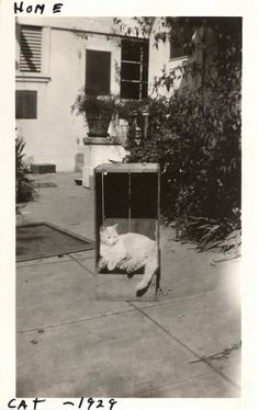 Lovely Cat Photos from the 1920's