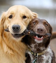 Two friends sharing equal credit for capturing a stick