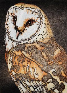 'Barn Owl' by Mike Smith. Blank Art cards from Green Pebble