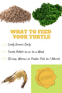 You may be inclined to think that a turtle's diet is rather plain and boring. What do turtles eat? Turtle Aquarium, Turtle Pond, Diy Aquarium, Cat Care Tips, Pet Care, Pet Tips, Pet Turtle Care, Turtle Tank Setup, Turtle Diet