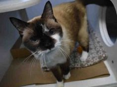 RETURNED - WAS ADOPTED BACK IN AUGUST. NEEDS A NEW HOME. **SENIOR- 12 YRS**