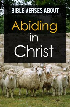 Abiding in Christ in the Bible